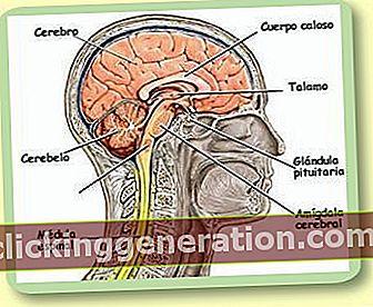 Definition af nervesystemet