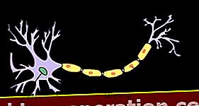 Definition af neuron