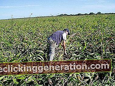 Definisjon av Agricultural