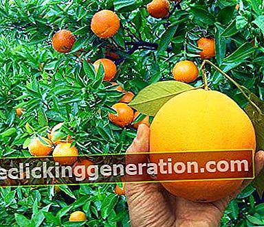 Definisjon av Sensation