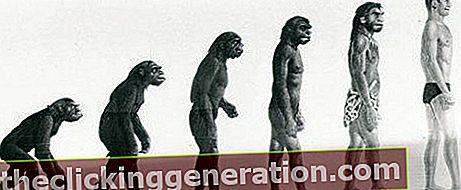Definition af evolution
