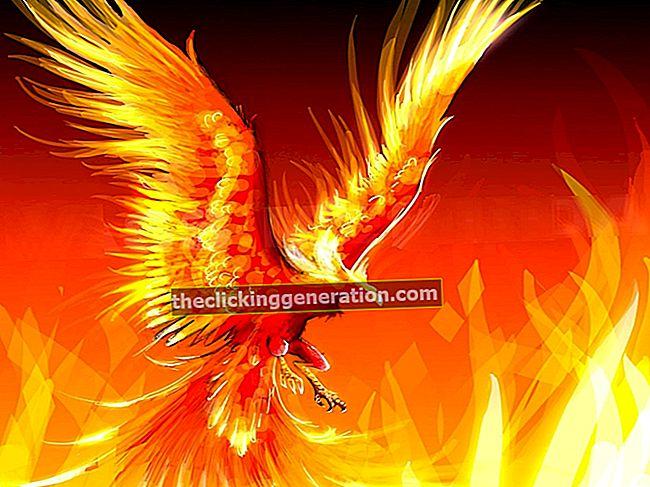 Definition af Phoenix