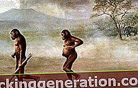 Australopithecus definition