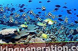 Ορισμός του υδάτινου οικοσυστήματος