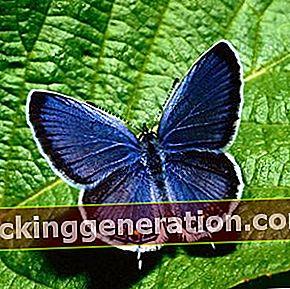 Ορισμός της πεταλούδας