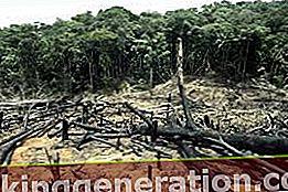 Ορισμός της αποψίλωσης των δασών