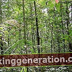 Ορισμός της ζούγκλας