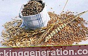 Ορισμός των δημητριακών