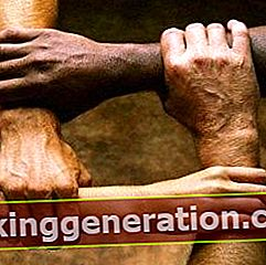 Definition af social organisation